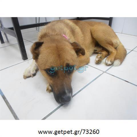 1301baa558c7 Δίνεται για υιοθεσία - χαρίζεται ημίαιμος σκυλάκος   Αγγελία 73260 ...
